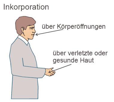 Inkorporation1